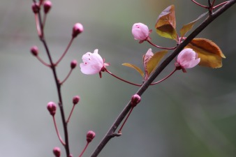 pink-4053094_1920